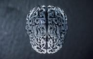 Mamy mózg. I to niejeden
