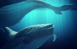 Śpiewające wieloryby