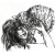 Zdjęcie profilowe anemone